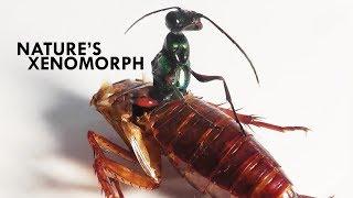 Wasps: The Literal Worst