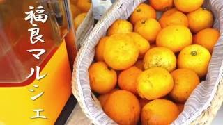 淡路 福良マルシェで『コールドプレスジュース』 淡路産はっさく100%ジュース thumbnail