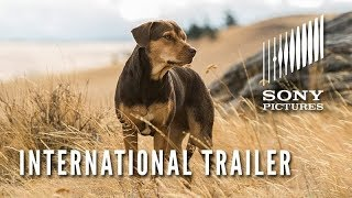 A Dog's Way Home | International Trailer | Now In Cinemas