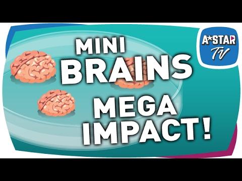 Mini Brains, Mega Impact