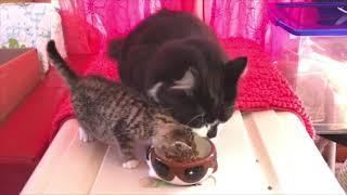 Rescued Kitten Finds Best Friend in Cat thumbnail