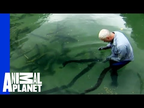What Was Jeremy Wade's Most Frightening Catch? | River Monsters