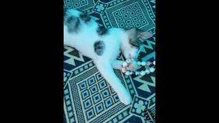 #LOVELY #CAT #SWEET #Cat #lovely #Cat
