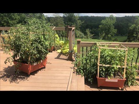 self watering patio container garden