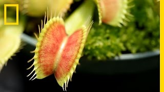 Confiscated Plants Get 2nd Life | National Geographic