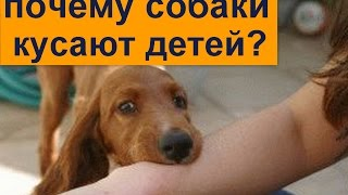собака укусила ребенка  почему собаки кусают детей