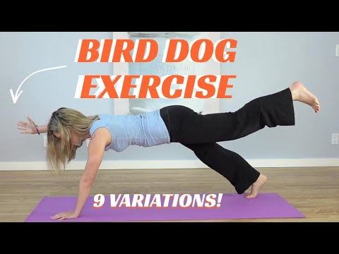 Bird Dog Exercise: Can you do all 9 variations?