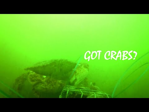 Here's What Happens To Your Crab Snare (footage Worth The Risk!)