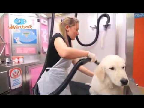 Wash dog lavaggio cani self service 24h youtube wash dog lavaggio cani self service 24h solutioingenieria Images
