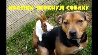 Приколы \ Неудачи \ Падения \ Идиоты \ Кролик чпокнул собаку \ Подборка от Best Video #27