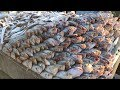 Big and Million Fishes ! Wholesale Sea Fish market at Chittagong Fisheryghat in Bangladesh