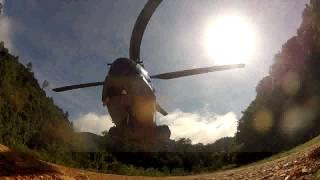 Tobys video of the East Kalimantan Orangutan releases
