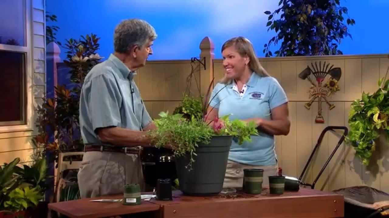 Central Florida Gardening Creating A Container Garden Youtube