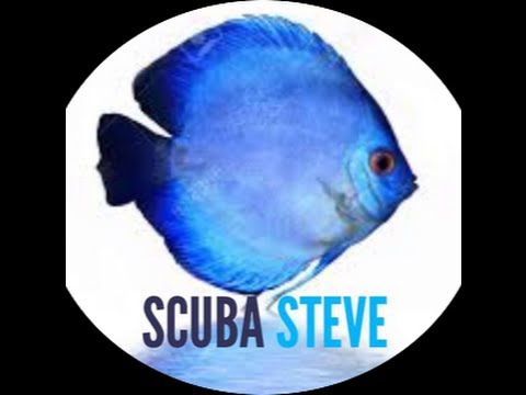 Best Treatment For Sick Discus