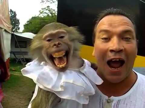 Monkey smiles like human
