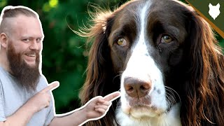 SPRINGER SPANIEL HEALTH AND LIFE EXPECTANCY