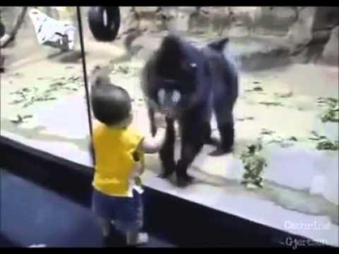 Cele mai haioase faze cu animale