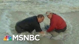 Baby Dolphin Rescued Off Marco Island | Morning Joe | MSNBC