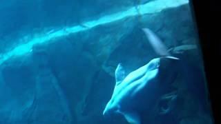 アトランタ水族館