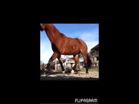 Mona best horse