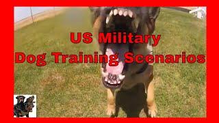 US Military -  Dog Training Scenarios