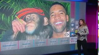 بي_بي_سي_ترندينغ: فيديو| أطرف شمبانزي يتصفح حسابه على انستاغرام