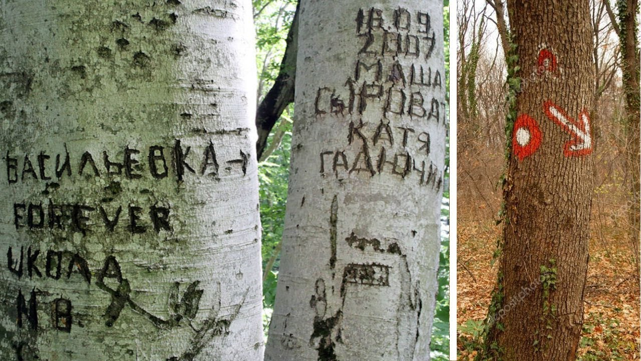 Надписи на дереве картинки