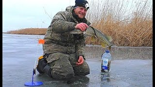 ПОСТАВИЛ ЖЕРЛИЦЫ И ПОНЕСЛАСЬ! Подводное видео АТАКИ ЩУКИ НА ЖИВЦА.  Зимняя рыбалка на щуку.