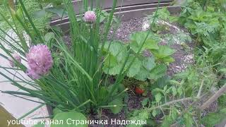 Обзор сада/огорода 15 Июня