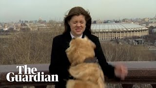 Dog interrupts live weather report in Moscow borrowing journalist's microphone