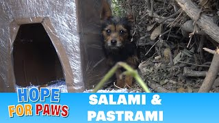 Video Salami and Pastrami lived on the cold streets until Hope For Paws got the call for help download MP3, 3GP, MP4, WEBM, AVI, FLV Agustus 2018