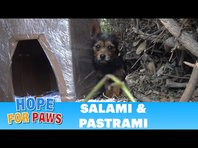 Salami and Pastrami lived on the cold streets until Hope For Paws got the call for help