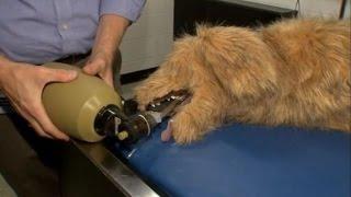 Изобретатели создали робота-домашнее животное для обучения ветеринаров (новости)