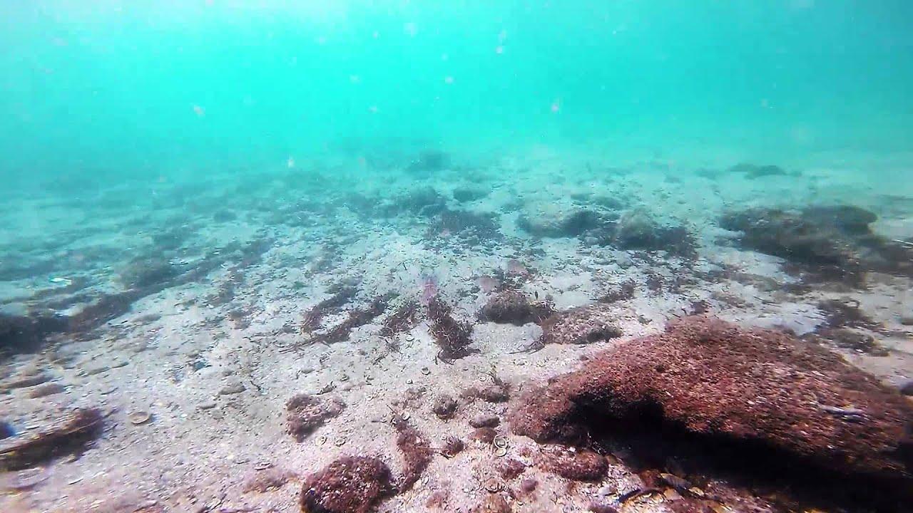 Pompano Beach Florida Gopro Snorkeling