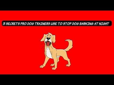 5-secrets-to-stop-dog-barking-at-night