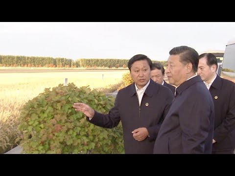 Xi Jinping: Greater emphasis should be put on agriculture technology
