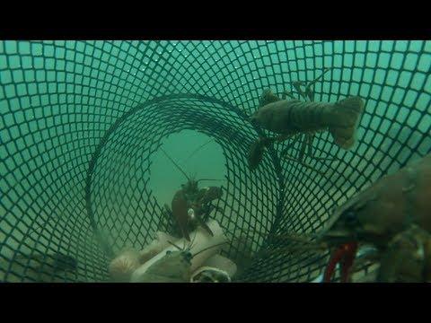 Oregon Crawfish Catch & Cook Plus UNDERWATER Footage