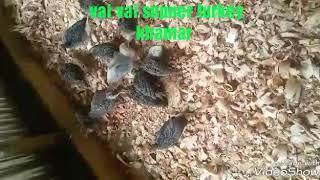 new from sofikul islam madaripur