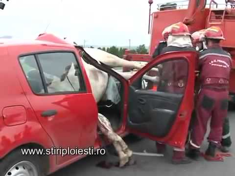Horse Car Accident Incredible Footage