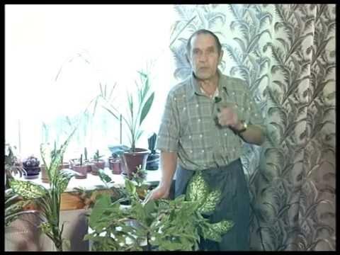 Каллы – посадка и уход, выращивание в саду и дома - YouTube