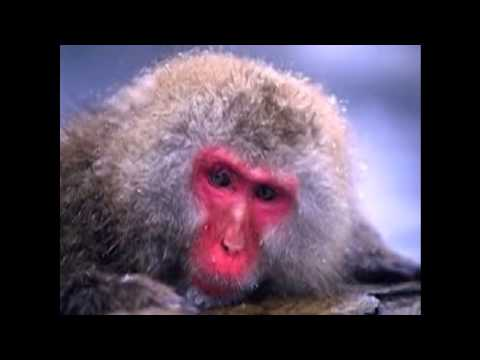 Little Red monkey.Played by Willy wilsons Twangsters