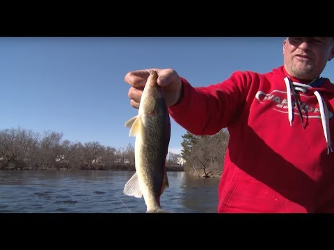Jigging Walleyes, Wisconsin River  - Larry Smith Outdoors