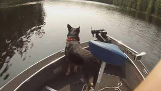 Canadian NESSIE spotting!!(lakemonster)/ fishing along with my coyote!!