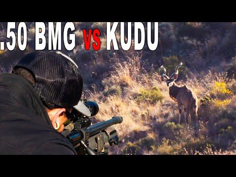 .50 BMG Kudu Hunt | South Africa