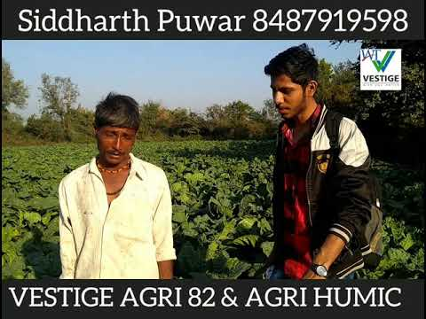 Best Result of Vestige Agri 82 & Agri humic in Gujarat. Proud of Indian products.