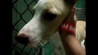 Chase... The Walmart Dog
