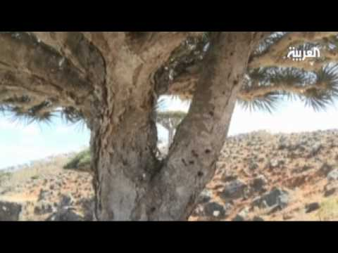 Socotra Island: Jewel in the Arabian Sea