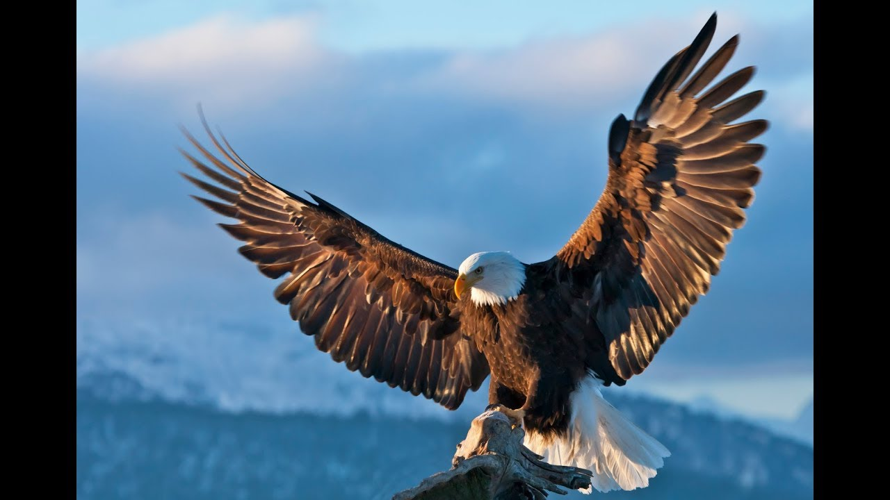 3 Lessons to learn from an Eagle - (Tamil Video) Raja Yoga Series ...