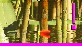 7-Поклевка КАРАСЯ. Одна из моих любимых поклевок :) Ловля карася. Насадка- опарыш. Ловля на поплавок(Поклевки, которые заворожили еще в детстве, никак не разворожат и в 53 года :). Май. Хронология одной поклевки....., 2013-05-27T09:17:04.000Z)