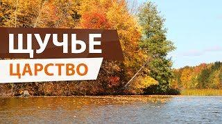 Осенний ЖОР ЩУКИ Удачная рыбалка на Волге